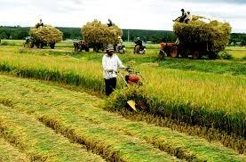 6 tháng cuối năm, ngành Nông nghiệp vẫn còn bất lợi