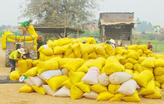 Xuất khẩu gạo 6 tháng đầu năm giảm mạnh