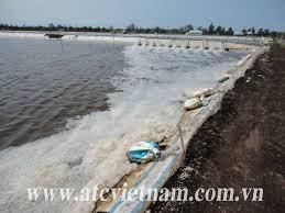 Việt Nam - Hoa Kỳ đạt giải pháp song phương về áp thuế chống bán phá giá tôm nhập khẩu