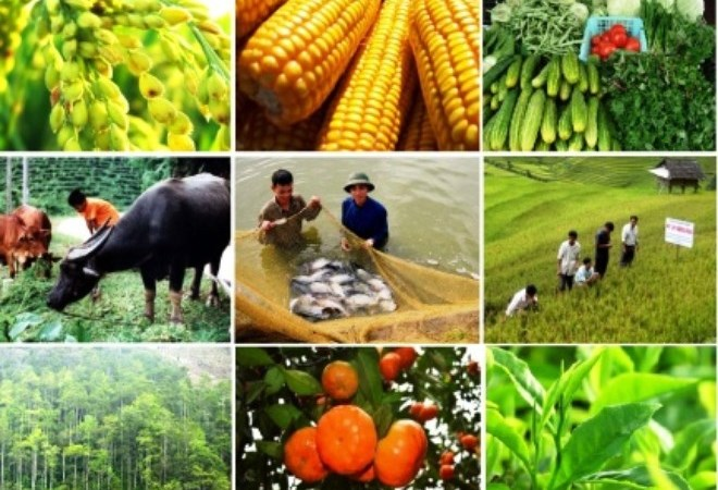 Giải ngân vốn xây dựng cơ bản ngành Nông nghiệp mới đạt 43,53%