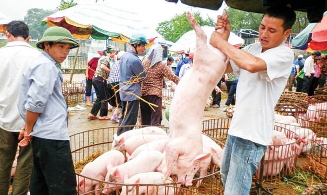 Giá thu mua lợn hơi tại Đồng Nai tăng