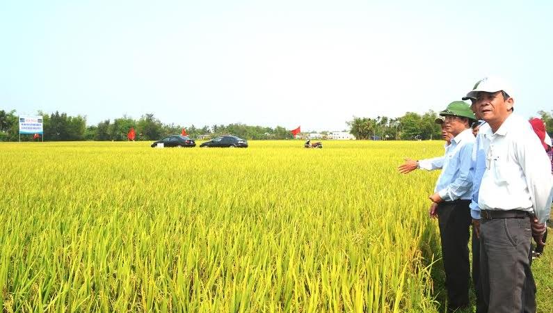 """""""Hút"""" doanh nghiệp đầu tư vào Nông nghiệp: Cần tích tụ ruộng đất"""