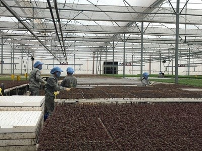 Xuất khẩu rau quả đạt mức tăng trưởng lớn nhất trong tháng 8