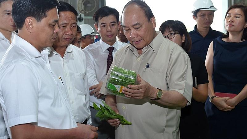Mô hình nông nghiệp công nghệ cao tại Hải Phòng có vốn đầu tư 200 tỷ đồng