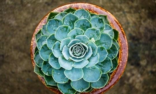 Cây trồng trong nhà mang lại tài lộc và sức khỏe năm mới