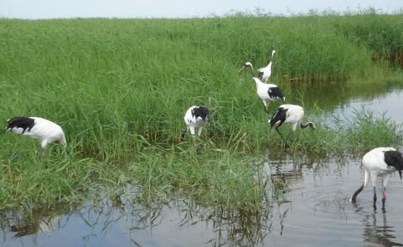 Ngày Đất ngập nước Thế giới: Nâng cao nhận thức về vai trò của các vùng đất ngập nước