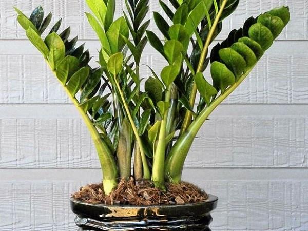 Những loại cây trồng trong nhà tốt cho sức khỏe