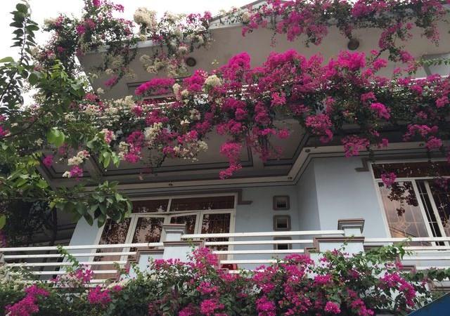 Những loại hoa nên trồng giúp không gian nhà bạn rực rỡ