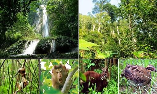 Tăng cường bảo vệ động vật hoang dã góp phần bảo tồn nền đa dạng sinh học Việt Nam