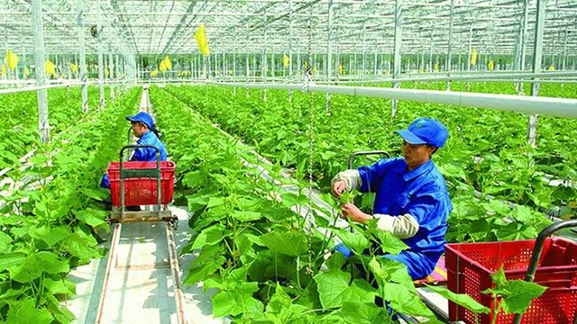 Nghẽn vốn FDI đầu tư vào nông nghiệp công nghệ cao