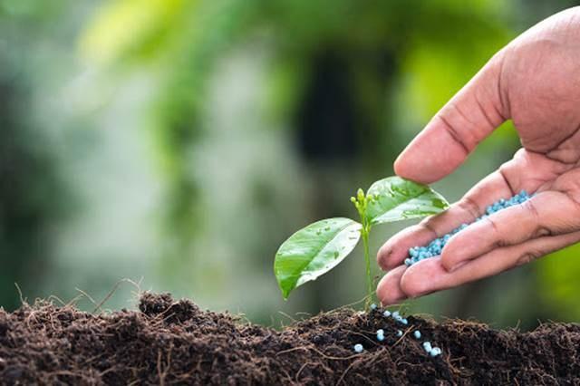 Bộ Tài chính ban hành quy định mới về quản lý phí trong lĩnh vực bảo vệ thực vật