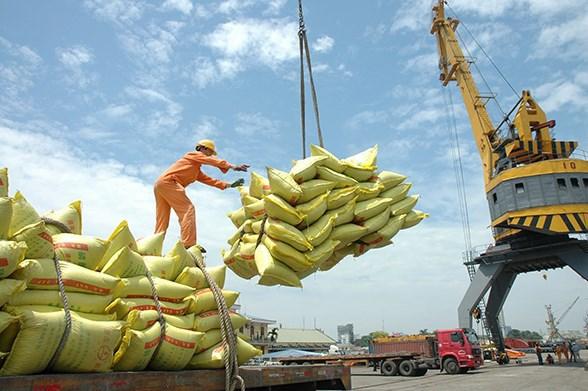 Cẩn trọng vấn đề suy giảm xuất khẩu gạo Việt Nam