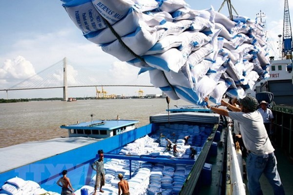Cảnh báo nguy cơ gạo Ấn Độ