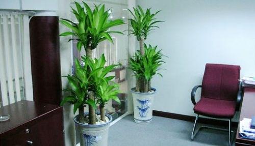 7 loại cây cảnh giúp môi trường làm việc hiệu quả hơn