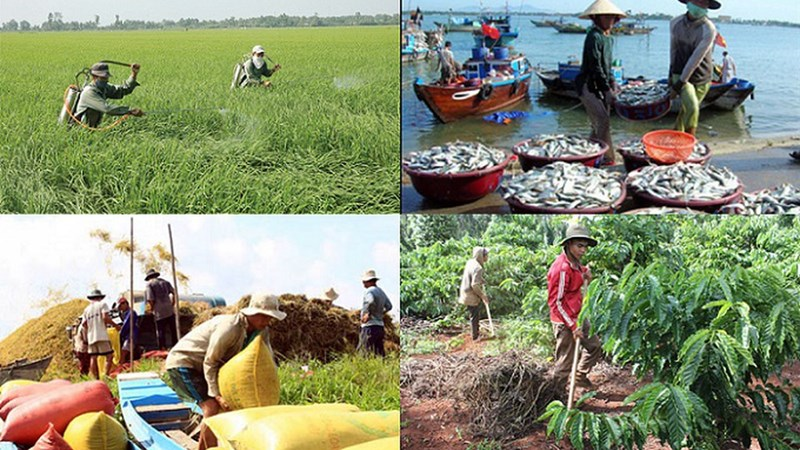 Nhà nước hỗ trợ phí bảo hiểm nông nghiệp cho hộ nghèo, cận nghèo đến 90%