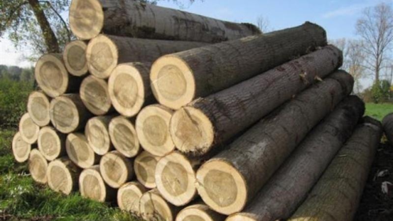 Việt Nam - Hoa Kỳ: Hợp tác kiểm soát nguồn gốc gỗ