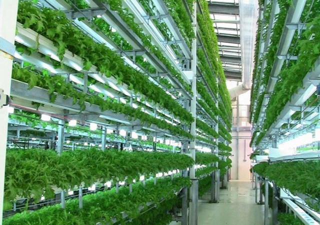 Mô hình phát triển nông nghiệp hiện đại và hàm ý về chính sách