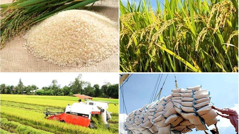 """Xuất khẩu gạo năm 2016: Bài toán lấy """"chất"""" bù """"lượng"""""""