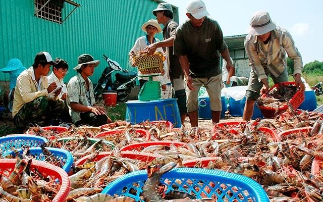 Khởi tố vụ giả giấy tờ kiểm định sản phẩm thức ăn thủy sản