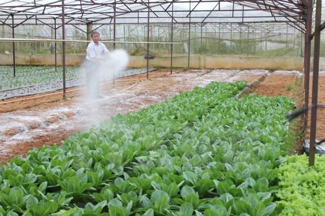 Doanh nghiệp Nhật đầu tư vào nông sản Việt