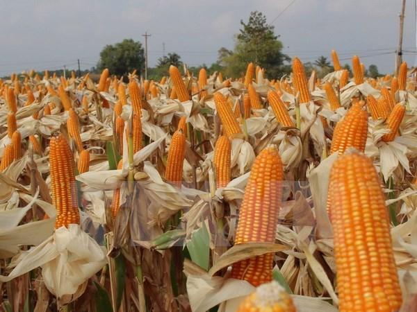 Giá lương thực, thực phẩm toàn cầu tăng cao nhất trong vòng 2 năm qua