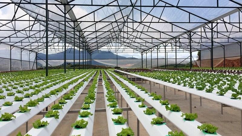 Vay phát triển nông nghiệp công nghệ cao thấp hơn 0,5-1,5%/năm lãi suất thông thường