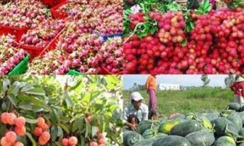 60% rau quả Việt xuất sang Trung Quốc
