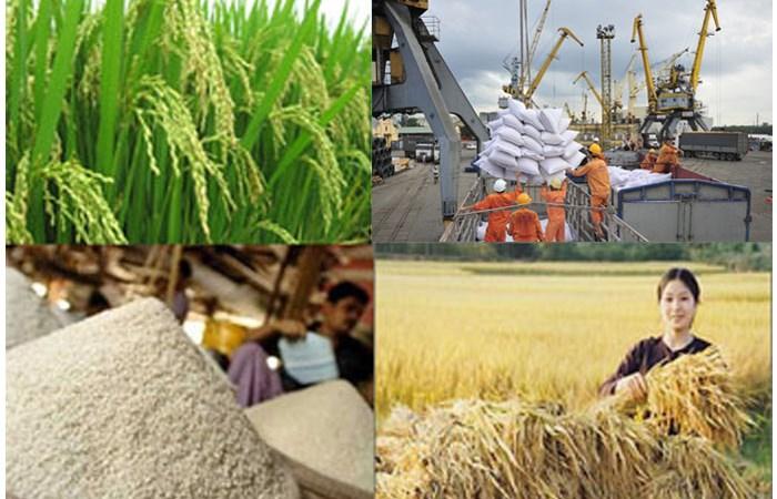 Xuất khẩu gạo: Giảm số lượng, tăng giá trị