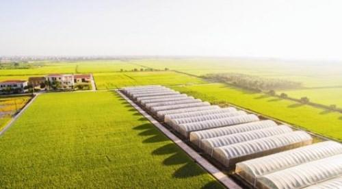 Nông nghiệp công nghệ cao: Chỉ vốn thôi chưa đủ
