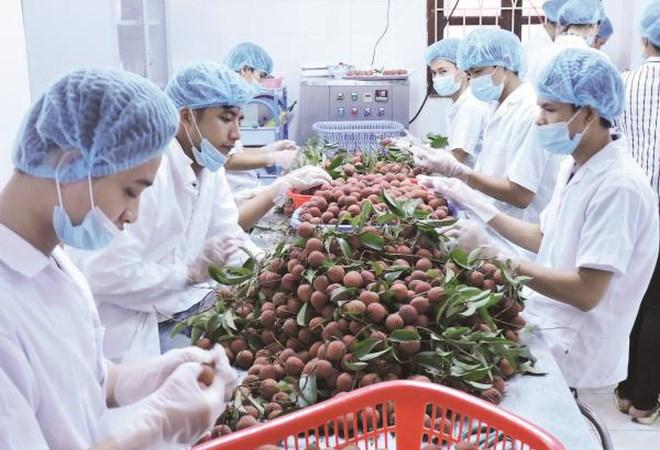 11 tháng 2017, xuất khẩu rau quả vượt ngưỡng 3 tỷ USD