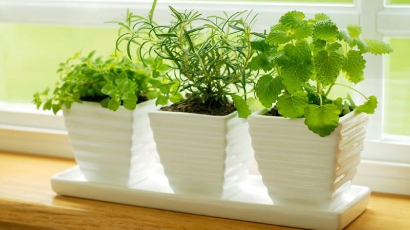Những loại cây trồng trong nhà bếp vừa đẹp vừa thanh lọc không khí