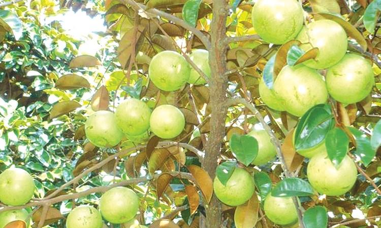 Tận dụng lợi thế xuất khẩu nông sản nhiệt đới sang EU
