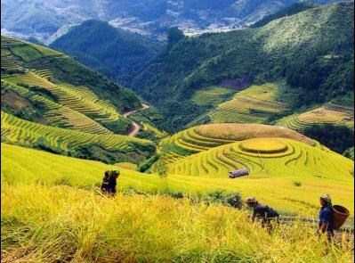 Tái cấu trúc đầu tư cho nông nghiệp