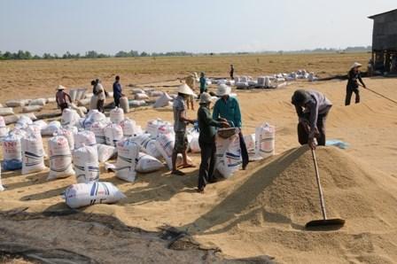 Tỷ lệ hộ dân tại Đồng Tháp tham gia bảo hiểm nông nghiệp ngày càng tăng