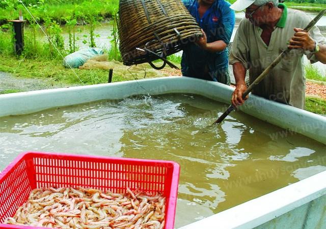 Bảo hiểm thủy sản: Không chỉ là chuyện bồi thường