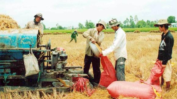 Tái cơ cấu nông nghiệp: Nên bắt đầu từ đâu?