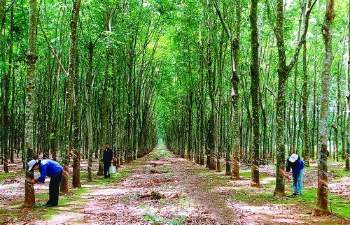 Nâng cao hiệu quả thi hành quy định pháp luật về quyền sử dụng đất lâm nghiệp ở Việt Nam