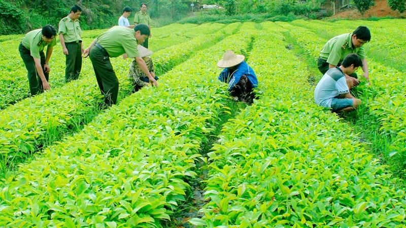 Đảm bảo kinh phí cho các dự án phát triển sản xuất giống phục vụ cơ cấu lại ngành Nông nghiệp