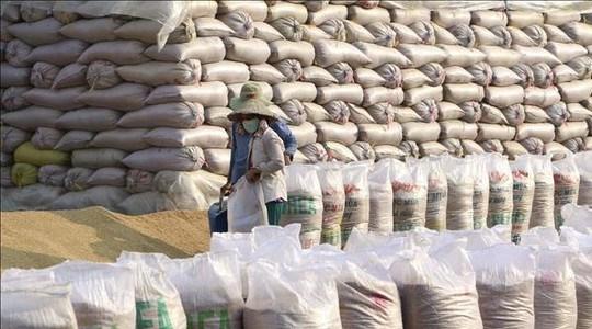 Xuất cấp hạt giống cây trồng từ nguồn dự trữ quốc gia hỗ trợ các tỉnh bị thiệt hại do thiên tai