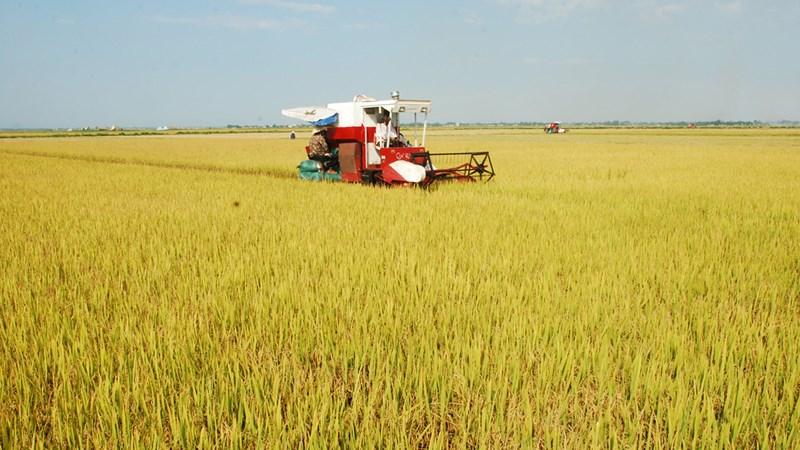 Long An: Đẩy mạnh xây dựng cánh đồng lớn