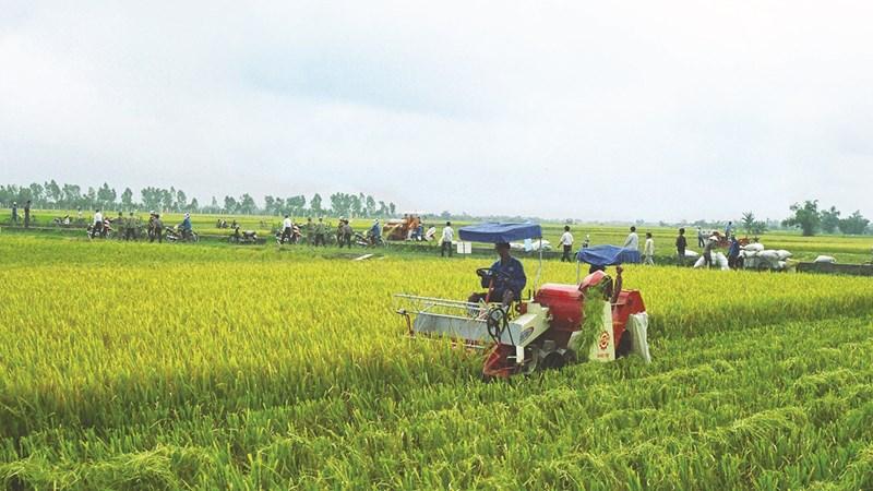 Tổ chức sản xuất nông nghiệp quy mô lớn được hỗ trợ đến 20% phí bảo hiểm nông nghiệp
