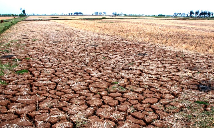 Quy định mới về bồi thường bảo hiểm nông nghiệp