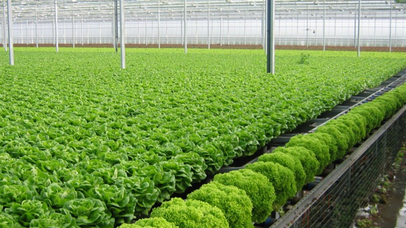 Vấn đề phát triển nông nghiệp công nghệ cao vùng Đồng bằng Sông Hồng