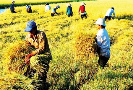 Nhìn lại chính sách đất nông nghiệp Việt Nam trong gần 30 năm đổi mới