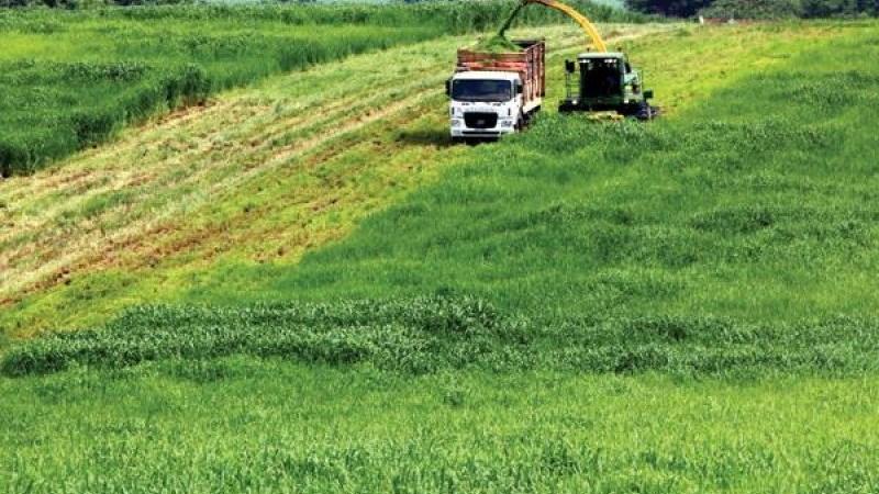 'Bắt sóng' FDI nông nghiệp