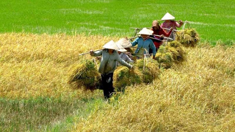 """Hội thi """"Kỹ thuật canh tác lúa tiên tiến vùng Đồng bằng sông Cửu Long"""