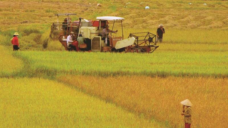 Phải nộp tiền khi dùng đất trồng lúa vào mục đích phi nông nghiệp