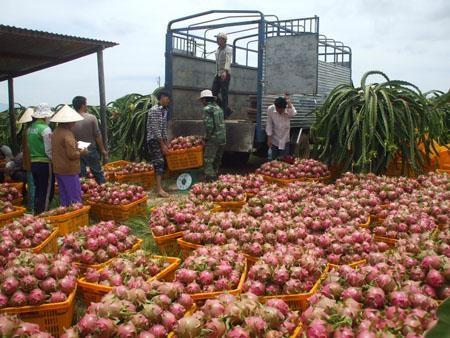 Nâng cao sức cạnh tranh hàng nông sản Việt Nam trong hội nhập