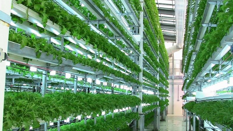 Khẩn trương xây dựng tiêu chí dự án nông nghiệp ứng dụng công nghệ cao