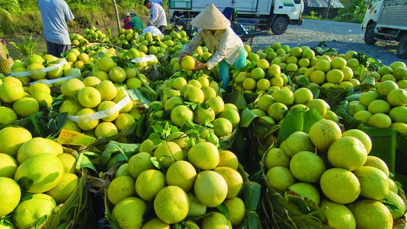 Đẩy mạnh tái cơ cấu nông nghiệp gắn với thị trường tiêu thụ